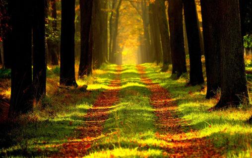 Wald (Bild: Pixabay)